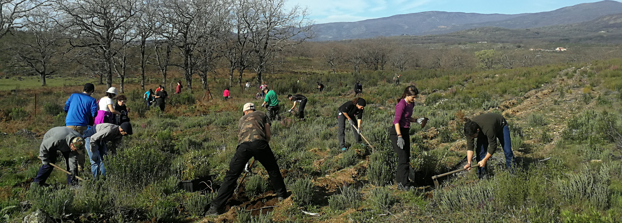 Plantabosques VOLUNTARIADO AMBIENTAL